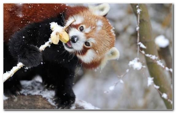 Image wildlife snout animal mammal cuteness