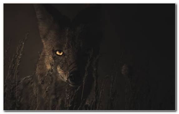 Image Wildlife Snout Atmosphere Night Midnight