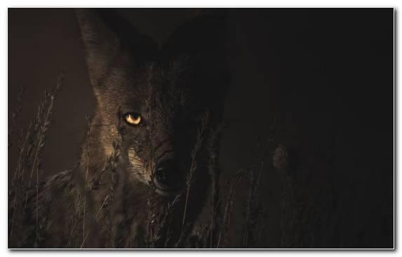 Image wildlife snout atmosphere night midnight