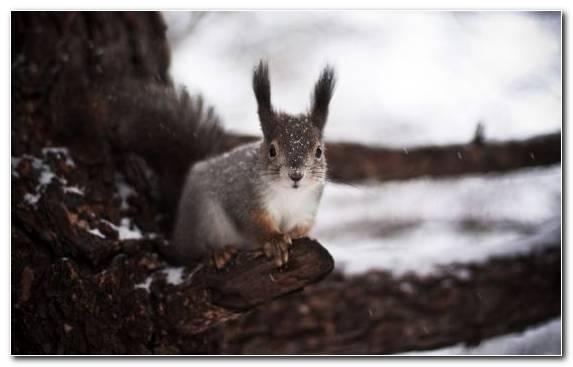 Image wildlife snout squirrel chipmunk fox squirrel