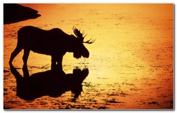 Image Wildlife Sunrise Sky Sunset Silhouette