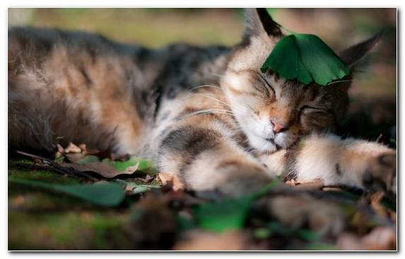 Image wildlife tabby cat fauna animal snout