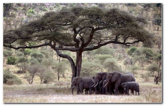 Image Wildlife Tree Terrestrial Animal Savanna Animal