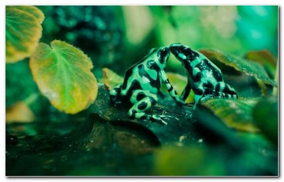 Image Wildlife Underwater Ecosystem Amphibian Ecology
