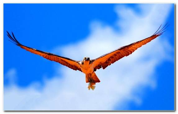 Image wildlife vulture bird bird of prey film