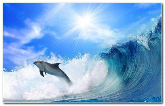 Image wind wave bottlenose dolphin animal wave water