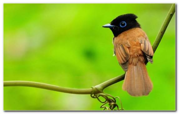 Image wing beak bird wildlife old world flycatcher