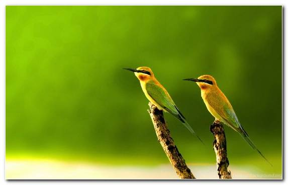 Image Wing Coraciiformes Old World Oriole Ecosystem Bee Eater