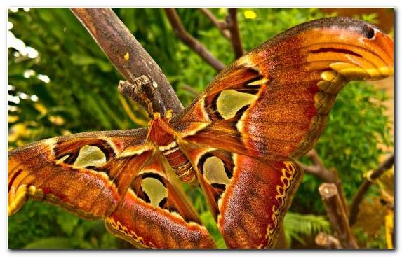 Image Wing Insect Terrestrial Animal Moth Arthropod