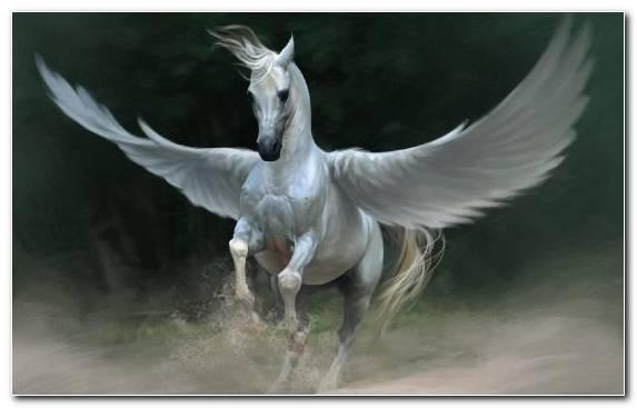 Image Wing Livestock Pegasus Mane White Horse