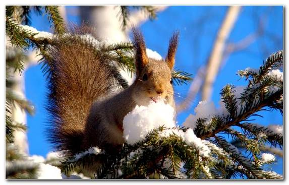 Image Winter Sky Rodent Squirrel Animal