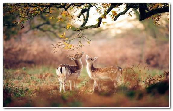 Image Woodland Deer Nature Reserve Puppy Kitten