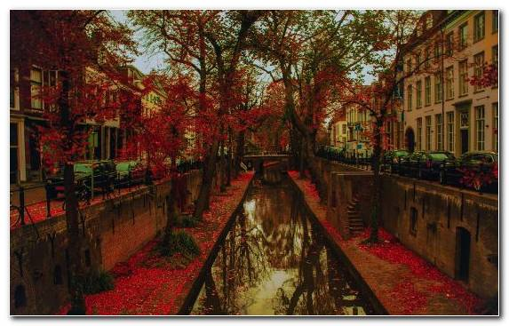 Image Woody Plant Canal Reflection Leaf Autumn Leaf Color