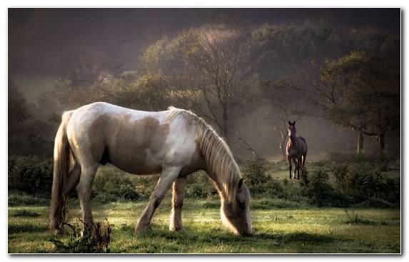Image Woody Plant Pasture Horses Grazing Grass
