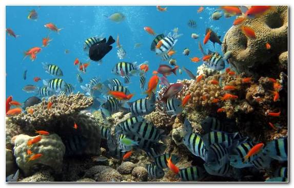 Image world ocean coral reef coral reef fish coral marine biology