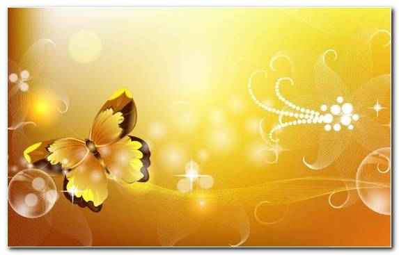 Image Yellow Petal Sunlight Moths And Butterflies Butterfly