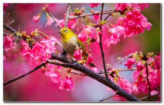 Image Youtube Bird Petal Color Nature