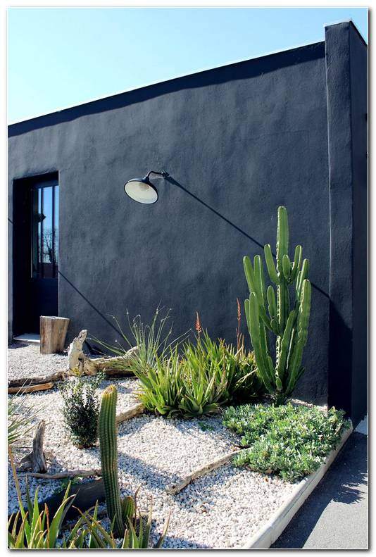 Jardines Minimalistas De Cactus