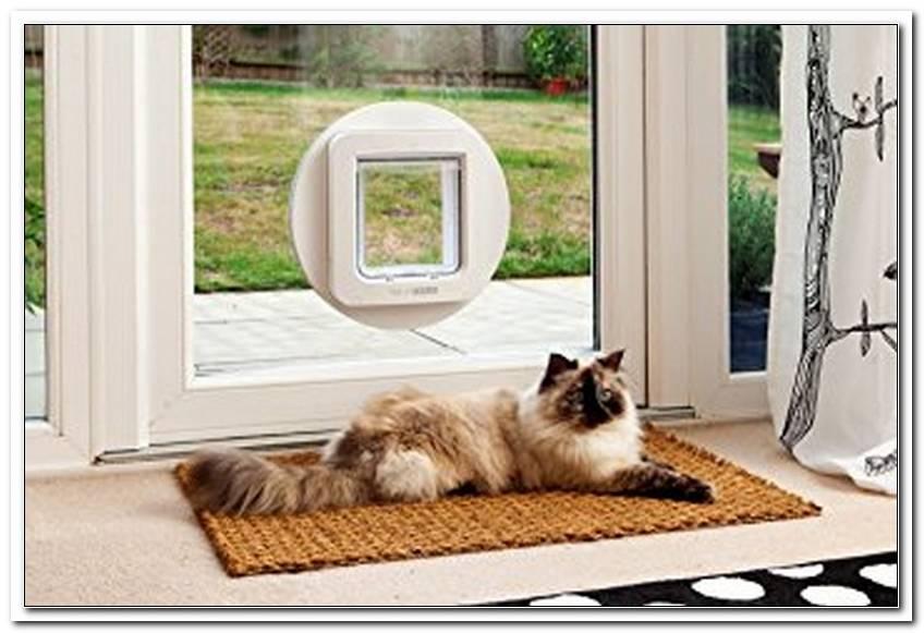 Kann Man Katzenklappe In Fenster Einbauen
