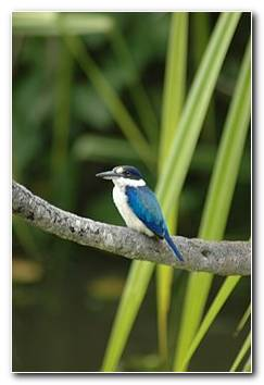 KingFisher Background