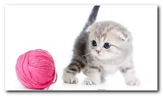 Kitten Backgrounds
