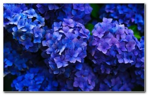 Korean Flowers HD Wallpaper