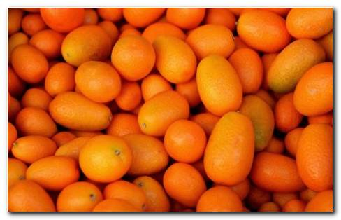 Kumquat HD Wallpaper