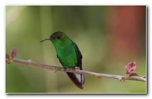 La Paz Hummingbird 1680x1050