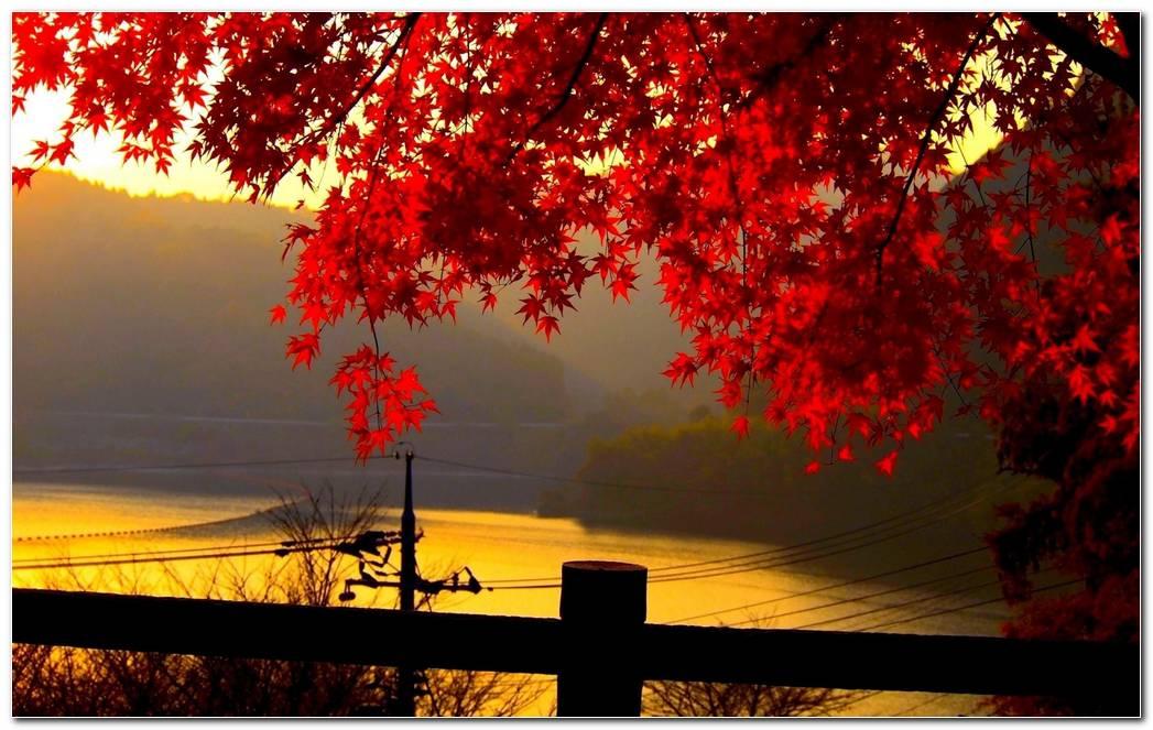 Landscape Autumn Nature Wallpaper Background