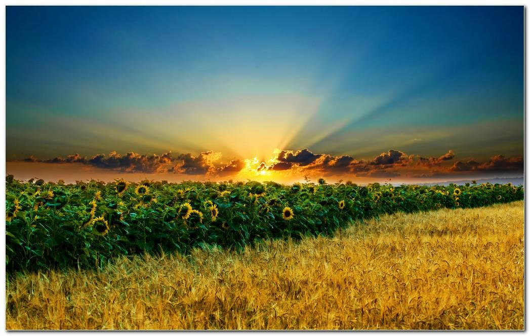 Landscape Nature Wallpaper Desktop Image