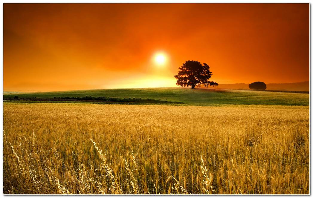Landscape Nature Wallpaper Desktop