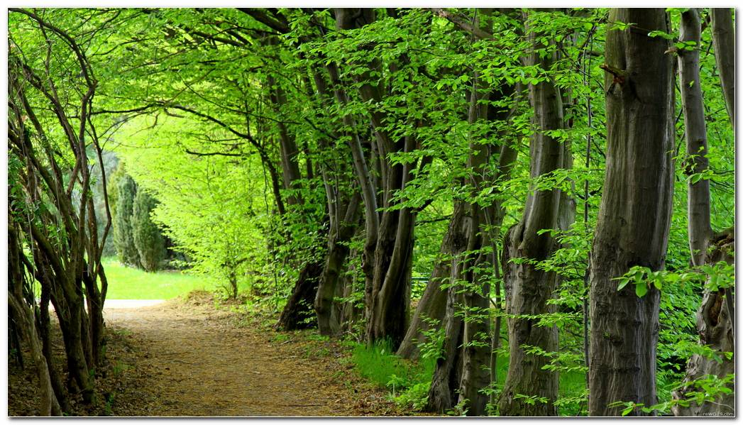 Large Green Forest Nature Wallpaper Background