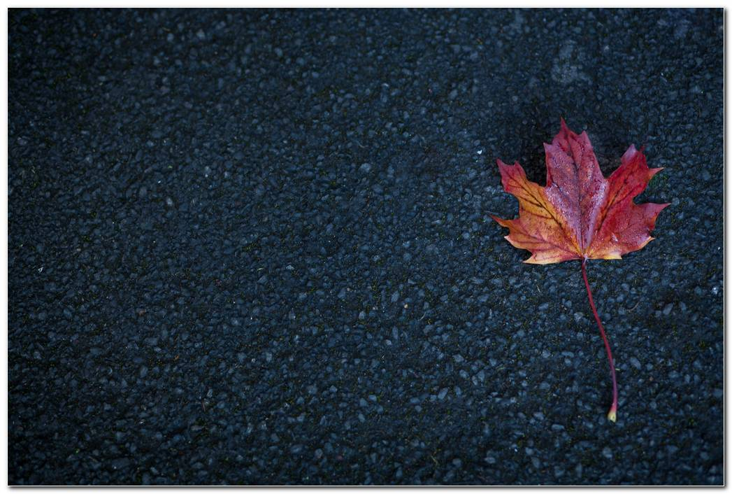 Leaf Hd Autumn Wallpaper