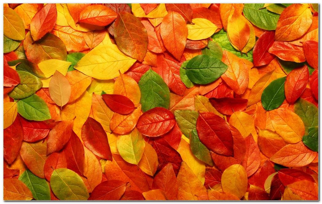 Leaves Autumn Wallpaper Dry