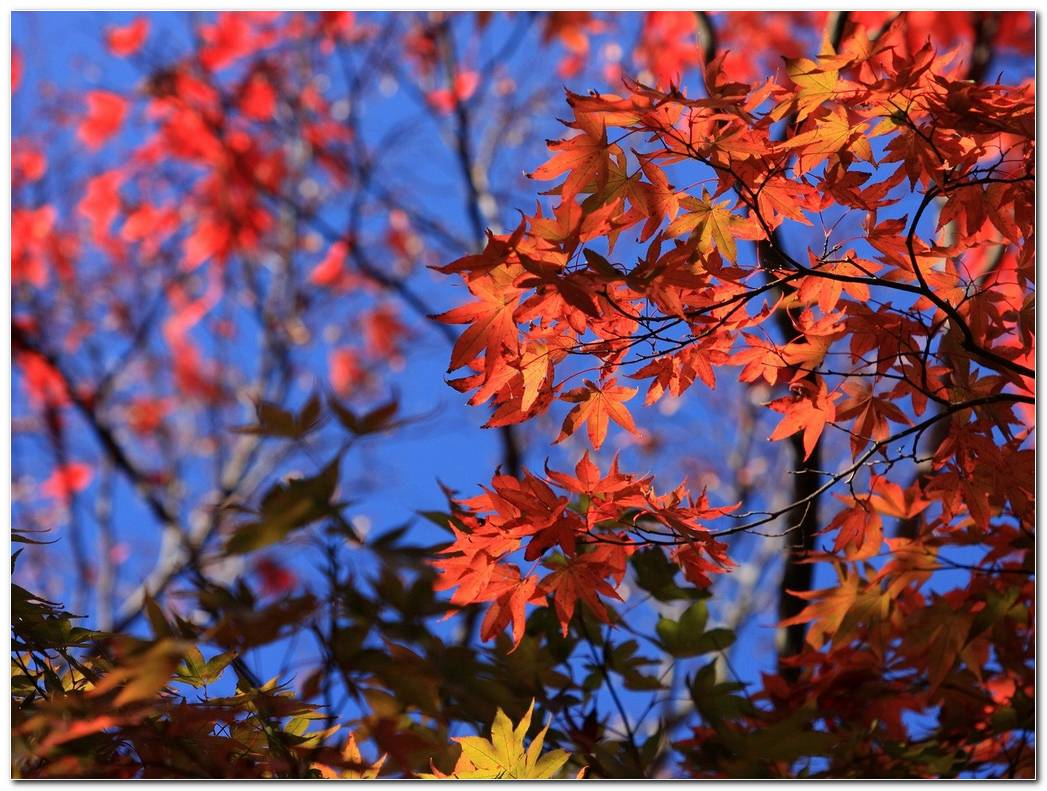 Leaves Autumn Wallpaper Hd