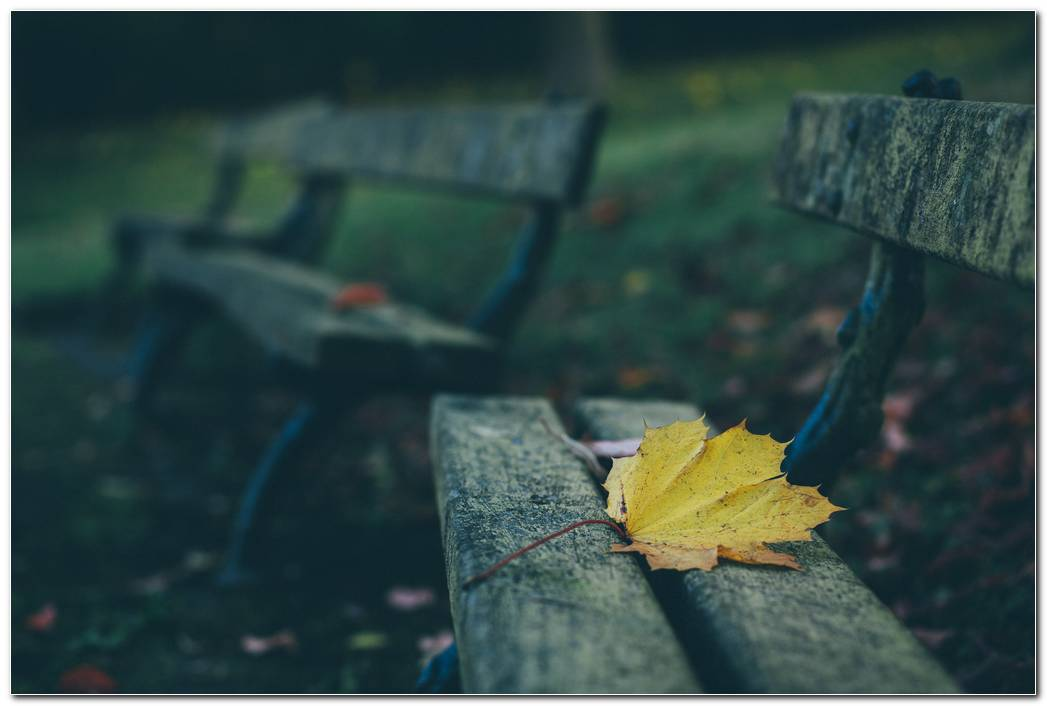 Leaves Bench Autumn Wallpaper