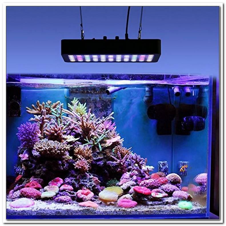 Led Aquarium Beleuchtung Meerwasser Test