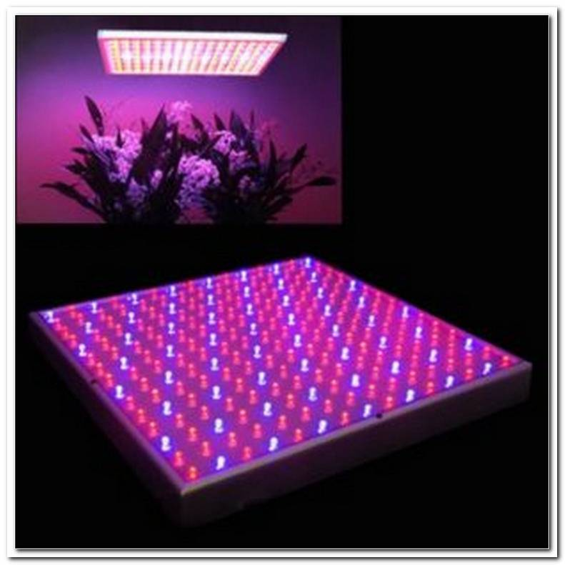Led Grow Lampe Test 2016