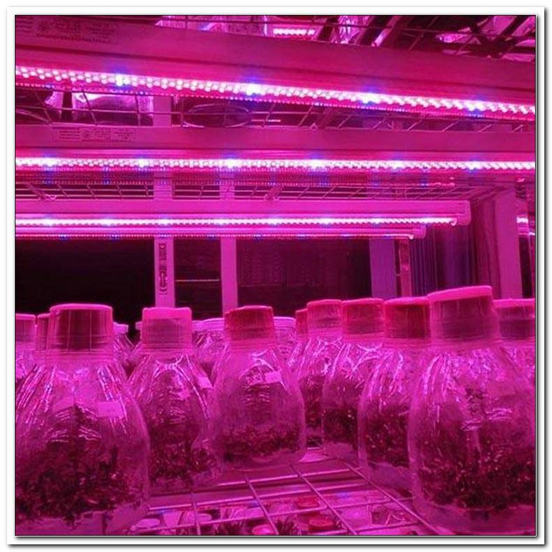 Led Lampen Voor Planten