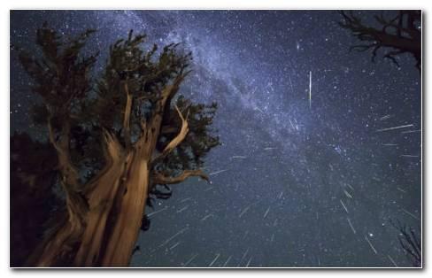 Meteor shower on tree HD wallpaper