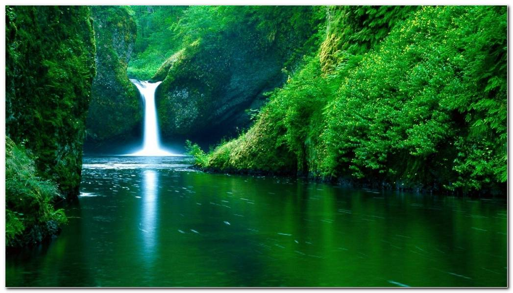 Most Popular Green Forest Nature Wallpaper Background Picture