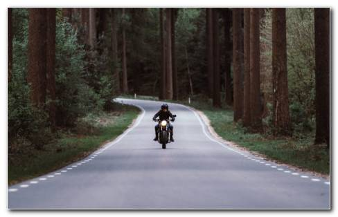 Motorcyclist And Forest HD Wallpaper