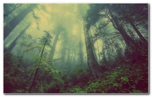 Mystical Garden HD Wallpaper