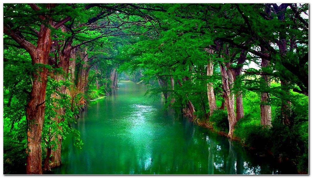 Natural Green Forest Nature Wallpaper Background Image