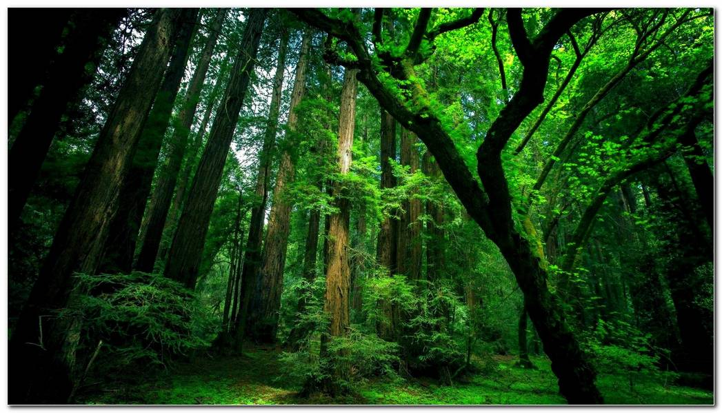 Natural Green Forest Nature Wallpaper Background