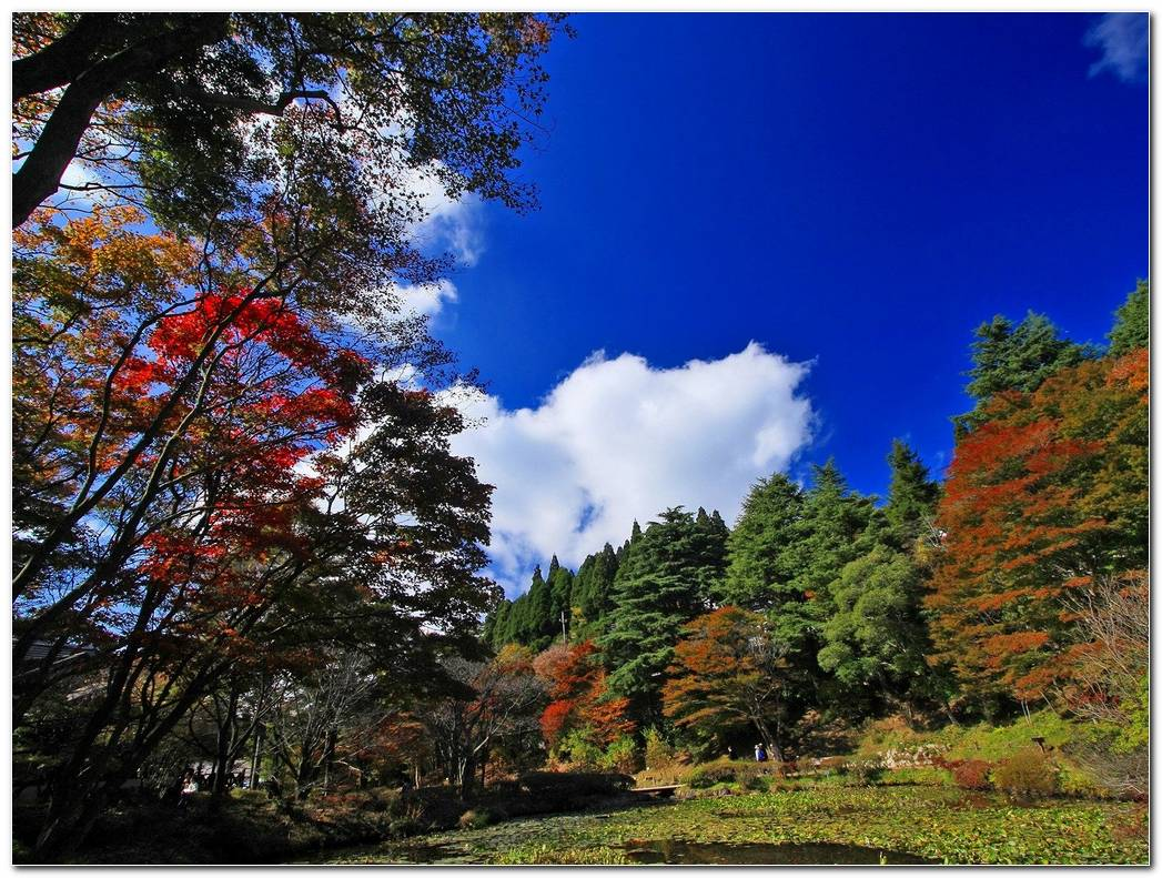 Nature Autumn Wallpaper Trees