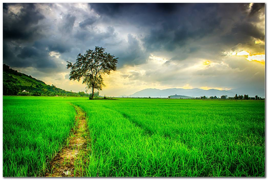 Nature Background HD