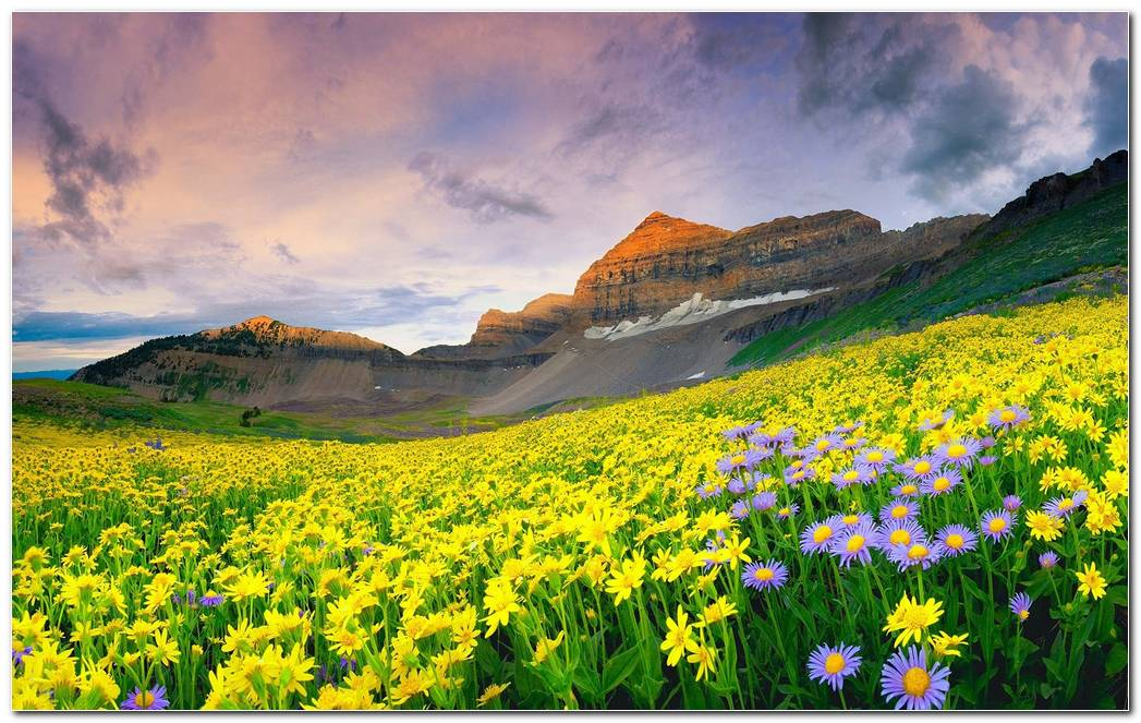 Nature Landscapes Valley Of Flowers Mountain Wallpaper Background