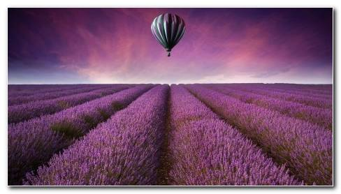 Nature Landscape Field Fields Air Balloon Flowers Purple Sky Wallpaper