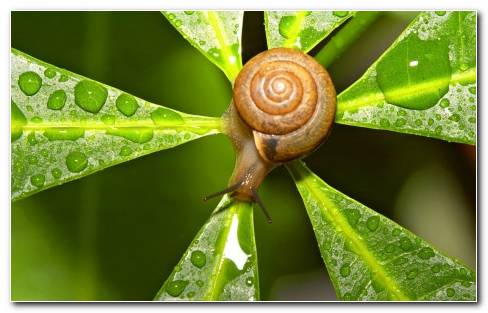 Nature Snails Water Drops Macro Depth Of Field Wallpaper